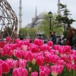 Sullo sfondo la Moschea Blu