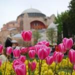 Tulipani sullo sfondo di Santa Sofia