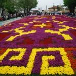 Il tappeto di tulipani